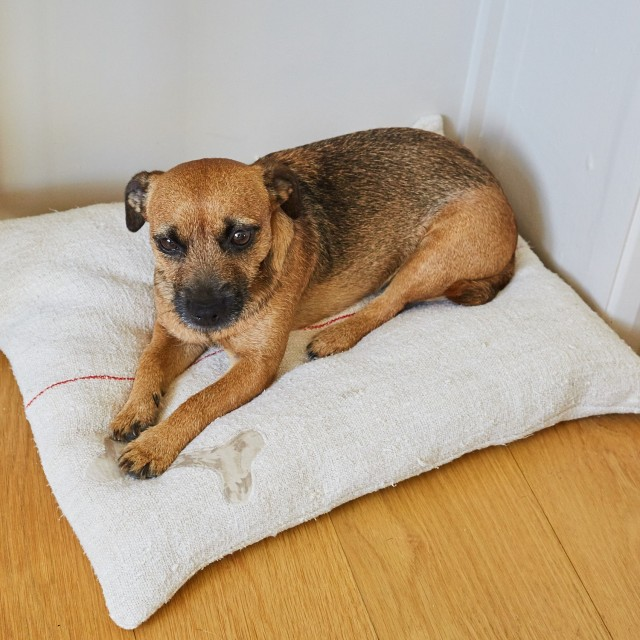 Vintage Grainsack Dog Bed - Small